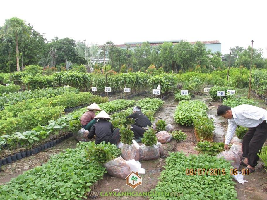 Hoạt động tại Vườn ươm Cây Xanh Gia Nguyễn