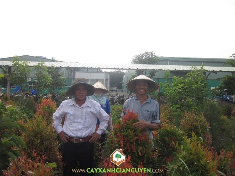 Nguyễn Công Quang, cây trồng, cây công trình, vườn cây cảnh, cây giống,