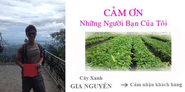 cay-xanh-gia-nguyen-cam-nhan-khach-hang