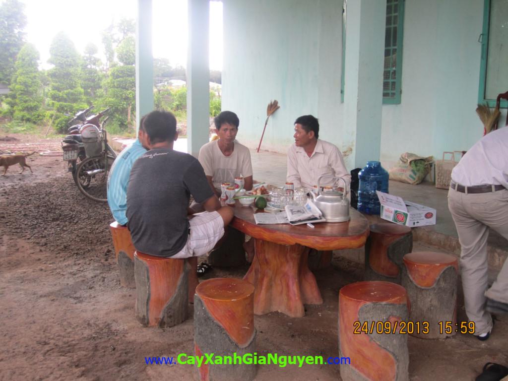 Cây xanh Gia Nguyễn, Cây giống lâm nghiệp, cây công trình, cây phong cảnh, vườn ươm, cây giống, cây trồng