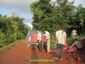 Cây xanh Gia Nguyễn, Cây công trình, cây giống lâm nghiệp, Nguyễn Công Quang, thiên nhiên