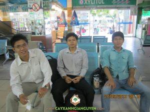 cây cao su, cây xanh Gia Nguyễn, chào đón, Hồ Chí Minh, phát triển kinh doanh