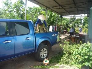 Cây Xanh Gia Nguyễn, cây công trình, cây Hắc Ó, cây cảnh, nguyên liệu