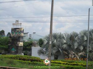 Công ty Cây Xanh Gia Nguyễn, Công Nghiệp Hà Mỵ, cây Hắc Ó,  loại cây, cây xanh, cây cảnh