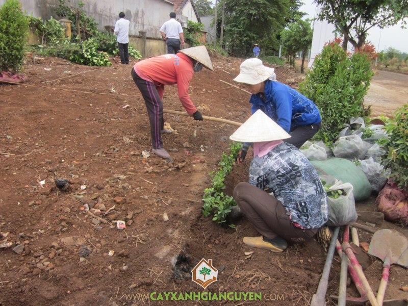 Cây Xanh Gia Nguyễn, Cây công trình, Hồng Lộc, trồng cây, chú Quang
