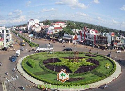 Thị xã Đồng Xoài, Đồng Xoài, Bình Phước, Cây Xanh Gia Nguyễn, công trình