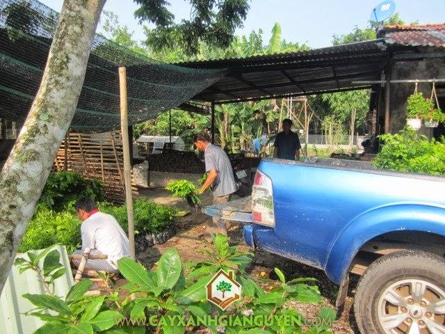 Quá trình vận chuyển tận nơi của Cây Xanh Gia Nguyễn