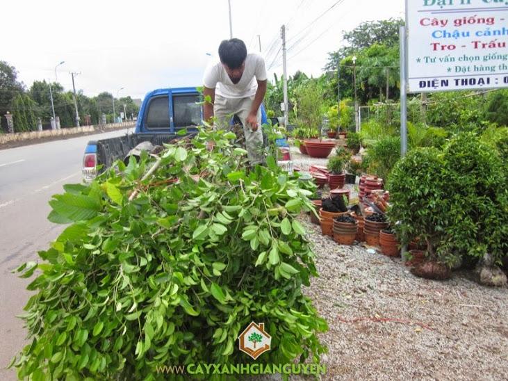 Công ty cung cấp cây giống cho khách hàng.