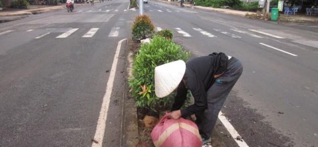 Trồng cây Hồng Lộc cho khách hàng.