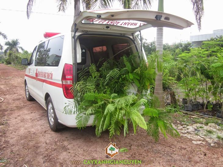 Cây Xanh Gia Nguyễn cung cấp cây cho khách hàng.