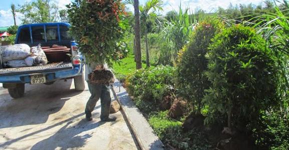 cây xanh Gia Nguyễn, cung cấp cây giống, cây công trình, cây hồng lộc, cây giống, vườn ươm cây xanh Gia Nguyễn