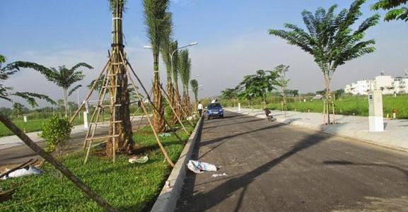cây xanh Gia Nguyễn, công ty cây xanh Gia Nguyễn, cây công trình, cây cọ dầu, cây giống, vườn ươm cây xanh Gia Nguyễn