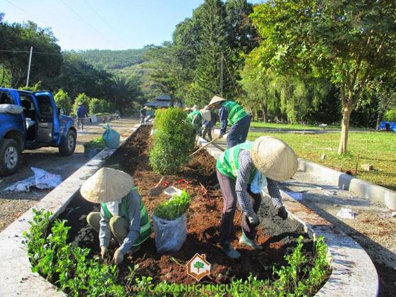 cây xanh Gia Nguyễn, cây công trình, cây hồng lộc, cây hắc ô, cây giống, vườn ươm cây xanh Gia Nguyễn