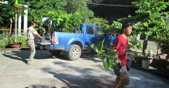 cây xanh Gia Nguyễn, cây dầu rái, cây giống, cung cấp cây giống, cây giống lâm nghiệp, cây lâm nghiệp, vườn ươm cây xanh Gia Nguyễn