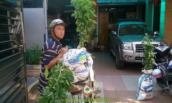 cây xanh Gia Nguyễn, cây giống, cung cấp cây giống, cây giống lâm nghiệp, cây gõ đỏ, cây giáng hương, vườn ươm cây xanh Gia Nguyễn