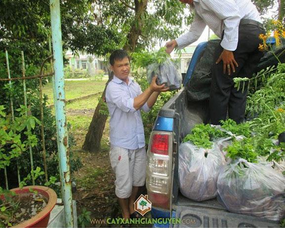 cây xanh Gia Nguyễn, cây lâm nghiệp, cây giống lâm nghiệp, cây sưa đỏ, vườn ươm cây xanh Gia Nguyễn, cây giống
