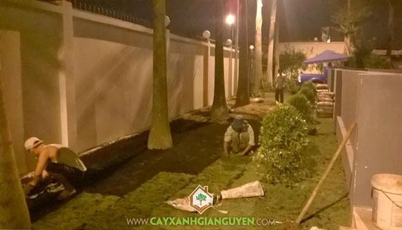 cây xanh Gia Nguyễn, cây công trình, cây thạch thảo, cây cỏ nhung, cây hồng lộc, cây cau vua, cây nguyệt quế