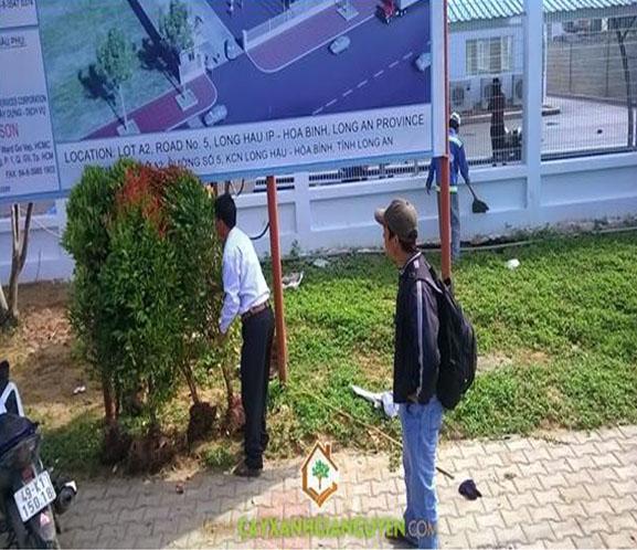 cây xanh Gia Nguyễn, cây hồng lộc, cây công trình, công ty cây xanh Gia Nguyễn, vườn ươm cây xanh Gia Nguyễn