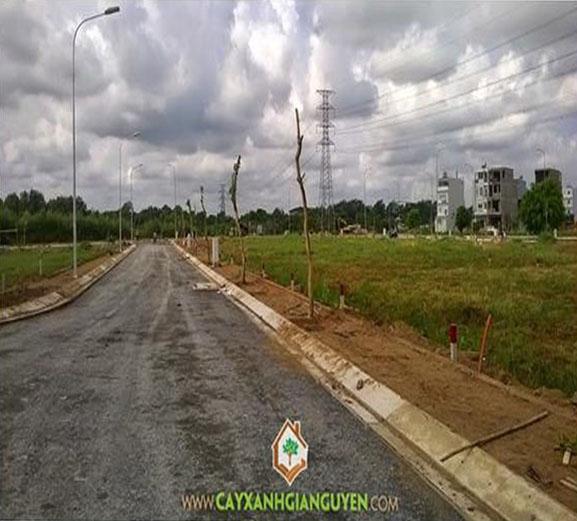 cây xanh Gia Nguyễn, công ty cây xanh Gia Nguyễn, cây osaka đỏ, cây công trình, khu dân cư, vườn ươm cây xanh Gia Nguyễn