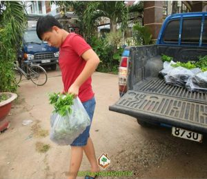 cây xanh Gia Nguyễn, cây giống lâm nghiệp, cây sưa đỏ, cây gỗ trắc, gỗ xoan, cây lâm nghiệp, vườn ươm cây xanh Gia Nguyễn