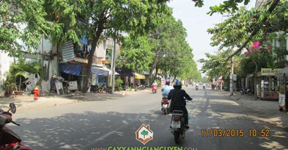 cây xanh, cây xanh đường phố, bảo vệ môi trường, giảm tiếng ồn, ổn định xã hội