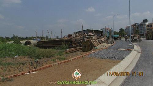 cây xanh Gia Nguyễn, công ty cây xanh Gia Nguyễn, cây giống, khu dân cư Bình Lợi, công ty Đại Phúc
