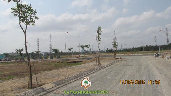 Cây xanh, cây xanh Gia Nguyễn, hàng cây xanh, khu dân cư Bình Lợi, xây dựng, công ty Đại Phúc
