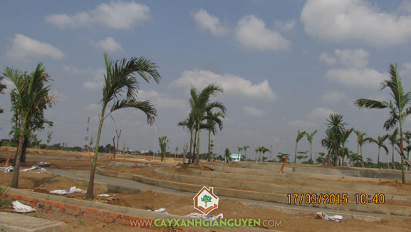 Cây xanh, cây xanh Gia Nguyễn, khuôn viên, trồng cây xanh, hợp đồng trồng cây, khu dân cư