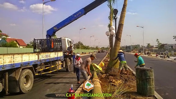 Cây xanh Gia Nguyễn, công ty cây xanh Gia Nguyễn, cây xanh, khu dân cư Bình Lợi, công ty cổ phần xây dựng Đại Phúc