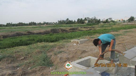 Tưới nước, tưới cây, cây xanh Gia Nguyễn, công ty cây xanh Gia Nguyễn, khu dân cư Bình Lợi