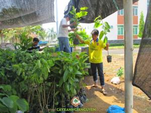 cây xanh Gia Nguyễn, cây dầu rái, móng bò tím, khu công nghiệp, công ty cây xanh Gia Nguyễn