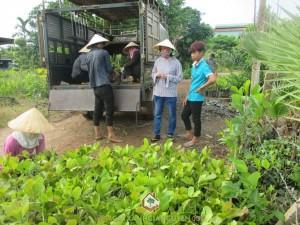 Cây Xanh Gia Nguyễn, Cây Điều giống, cây giống, cây giống lâm nghiệp