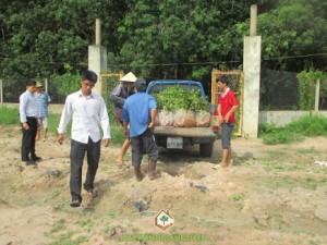 cây giống, cây xanh, Cây Xanh Gia Nguyễn, cây Gáo Vàng