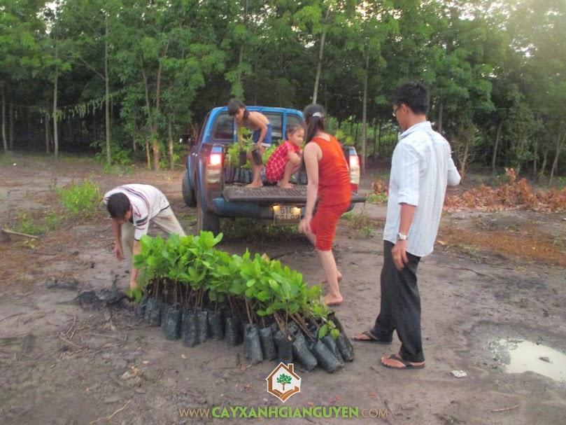 Cây xanh Gia Nguyễn, điều cao sản, công ty cây xanh Gia Nguyễn, điều giống, giống điều cao sản Ấn Độ