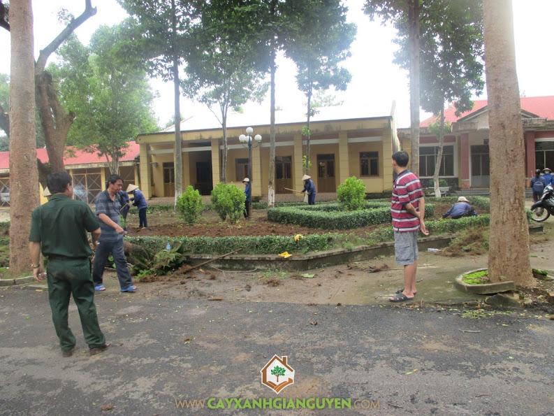 Công ty cây xanh Gia Nguyễn, cây nguyệt quế, cung cấp cây giống, trồng và chăm sóc cây, cây giống