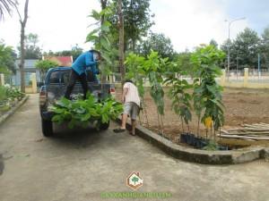 Công ty cây xanh Gia Nguyễn, Cây dầu rái, Giống cây dầu rái, Giống cây lâm nghiệp, KCN Bắc Đồng Phú