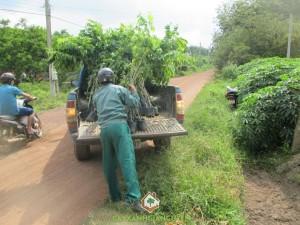Công ty cây xanh Gia Nguyễn, Cây sưa đỏ, Các loại cây giống, Giống cây lâm nghiệp, Giá trị kinh tế cao