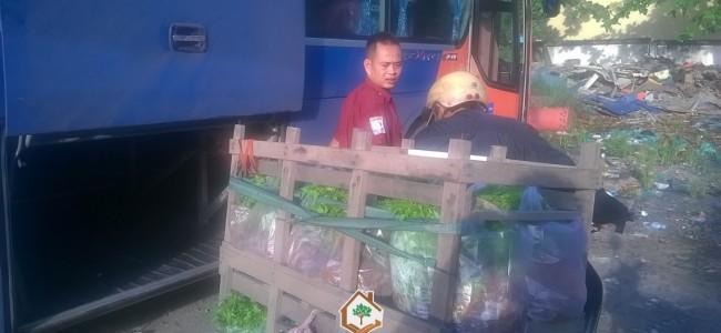 Cây xanh Gia Nguyễn, Cây xoan đào, Gỗ xoan đào, Cây lâm nghiệp, Hợp đồng online