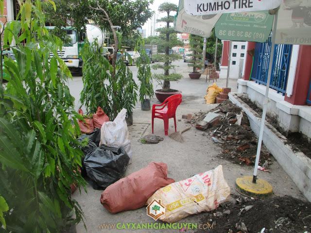Công ty cây xanh Gia Nguyễn, Cây hoàng nam, Cây hắc ó, Cây giống, Cây xanh Gia Nguyễn