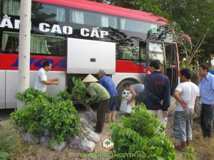 Công ty Cây Xanh Gia Nguyễn, Cây Gỗ Trắc, Cây Cẩm Lai, Giống cây trồng, Cây giống