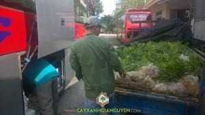 Cây xanh Gia Nguyễn, Cây keo lai, Vườn keo lai, Cung cấp giống cây trồng, Giống cây