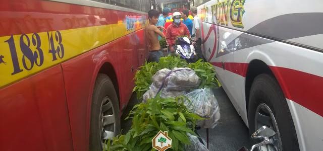 Công ty Cây Xanh Gia Nguyễn, Hợp đồng online, Cây Hoàng Nam, Hoàng Nam giống, Cây xanh đô thị