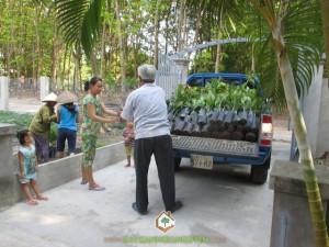 Cây Xanh Gia Nguyễn, Cây Điều Thái Lan, Cây Mãng Cầu Na Thái, Cây Sầu Riêng, Cây Giống
