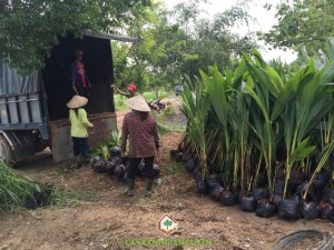 Cây Xanh Gia Nguyễn, Công ty du lịch sinh thái sơn tiên, Dừa xiêm lùn, Cây bơ sáp da xanh, Vườn ươm Gia Nguyễn