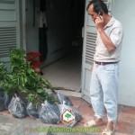 CÂY XANH GIA NGUYỄN CUNG CẤP 100 CÂY BẰNG LĂNG CHO CHỊ TRANG Ở TP. HỒ CHÍ MINH