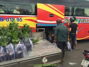 Cây ăn trái, Vườn ươm Gia Nguyễn, Cây chanh không hạt, Cây Mít Tố Nữ, Cây Dừa Xiêm Lùn