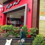 CÂY XANH GIA NGUYỄN TRỒNG 10 CÂY NGUYỆT QUẾ CHO CÔNG TY PIZZA HUT