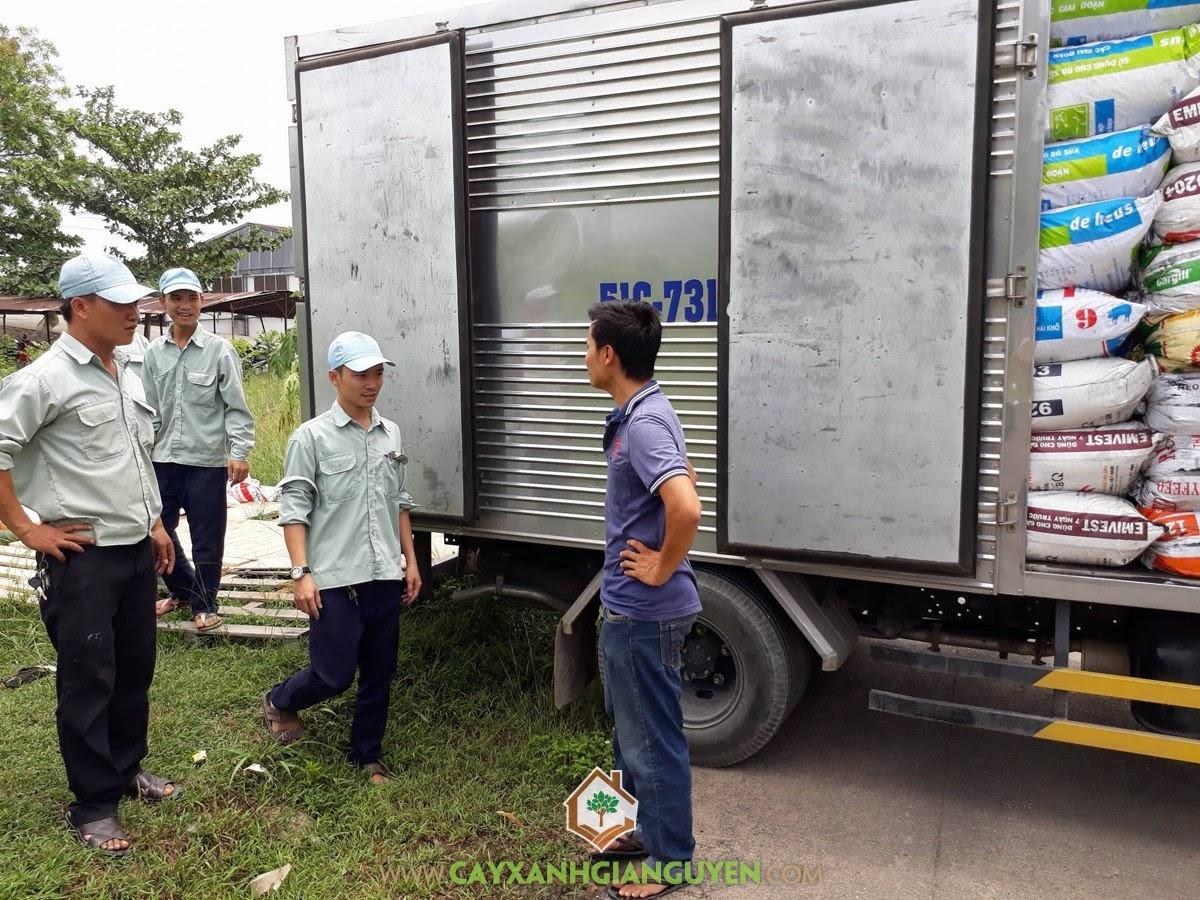 Vườn ươm Cây Xanh Gia Nguyễn, Trồng và chăm sóc Cây Xanh, Bao Xơ Dừa, Tro Trấu, Phân Bò