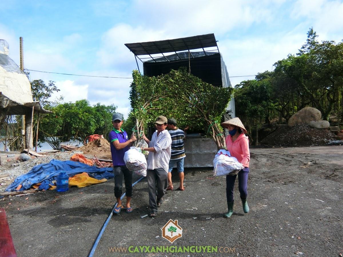 Vườn ươm Cây Xanh Gia Nguyễn, Chòi Kiểng, Chòi Kiểng hình lục giác, Cây Xanh, Vườn Sinh Thái