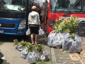 Cây điều PN1, Giống điều PN1, Vườn ươm Cây Xanh Gia Nguyễn, Chăm sóc vườn điều, Giống điều PN1 cao sản
